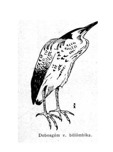 madár2