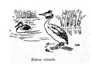 madár3